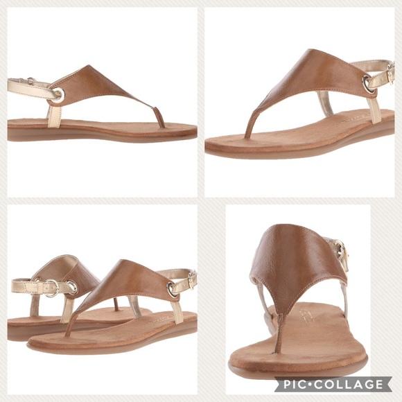 2afa70e874dc AEROSOLES Shoes - Aerosoles Conchlusion Gladiator sling back sandal